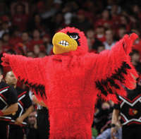 Louisville League of Mascots           Follow @nyccitiview