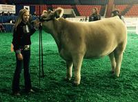 North American International
