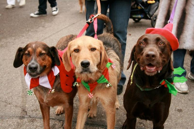 The Annual Mt. Adams Reindog Parade