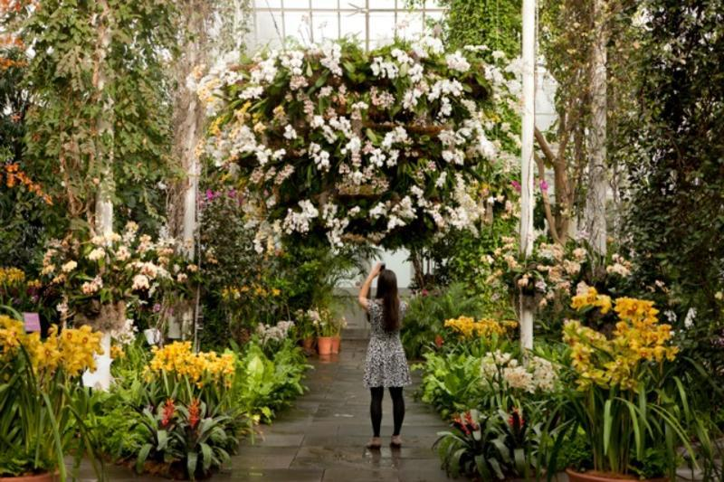 The Orchid Show At New York Botanical Garden Nyc Events Item