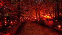 Best Halloween Events in Louisville