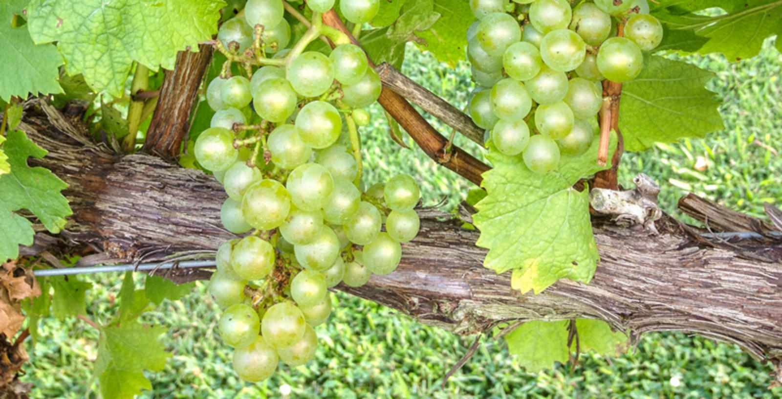 Wineries of Bullitt County, Kentucky