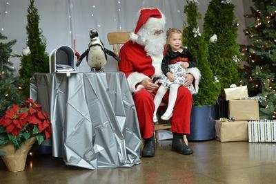 Photos with Santa & His Penguin Helper
